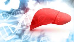 Le proteine proteggono il fegato